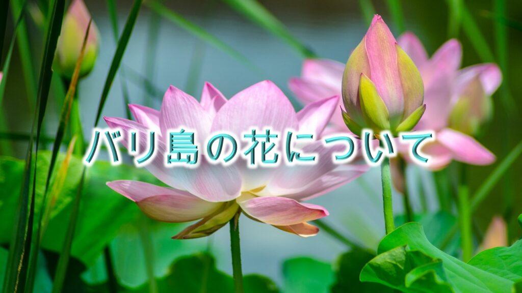 バリ島の花