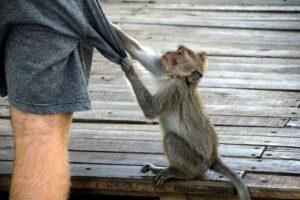バリ島の観光地ウブドの猿